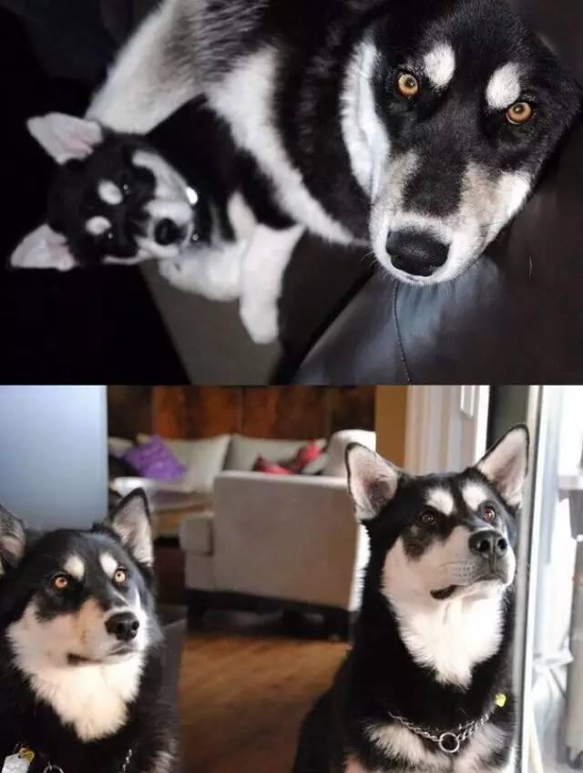 狗狗长大后和小时候对比照,看的让人心疼!