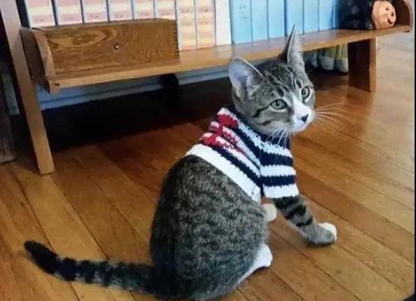 小时候特意给猫织了个毛衣,可长大后比例有点。。