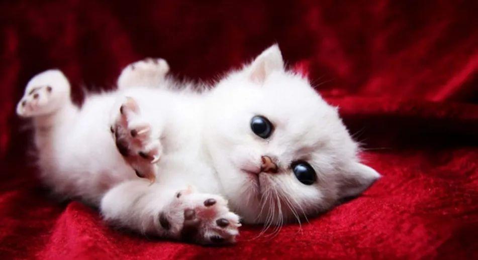 """猫咪取暖器前烤火,竟烤成这副""""怪模样"""",主人看了哭笑不得"""