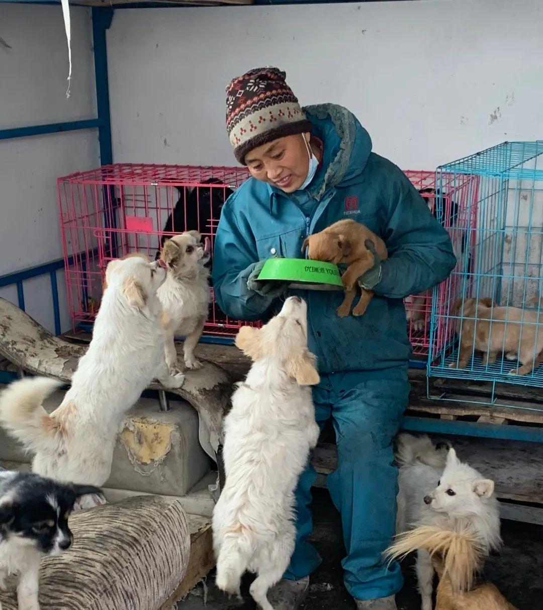 请帮帮它们吧!-20℃寒冬,大西北600多只流浪狗陷入饥荒,急需粮食过冬!