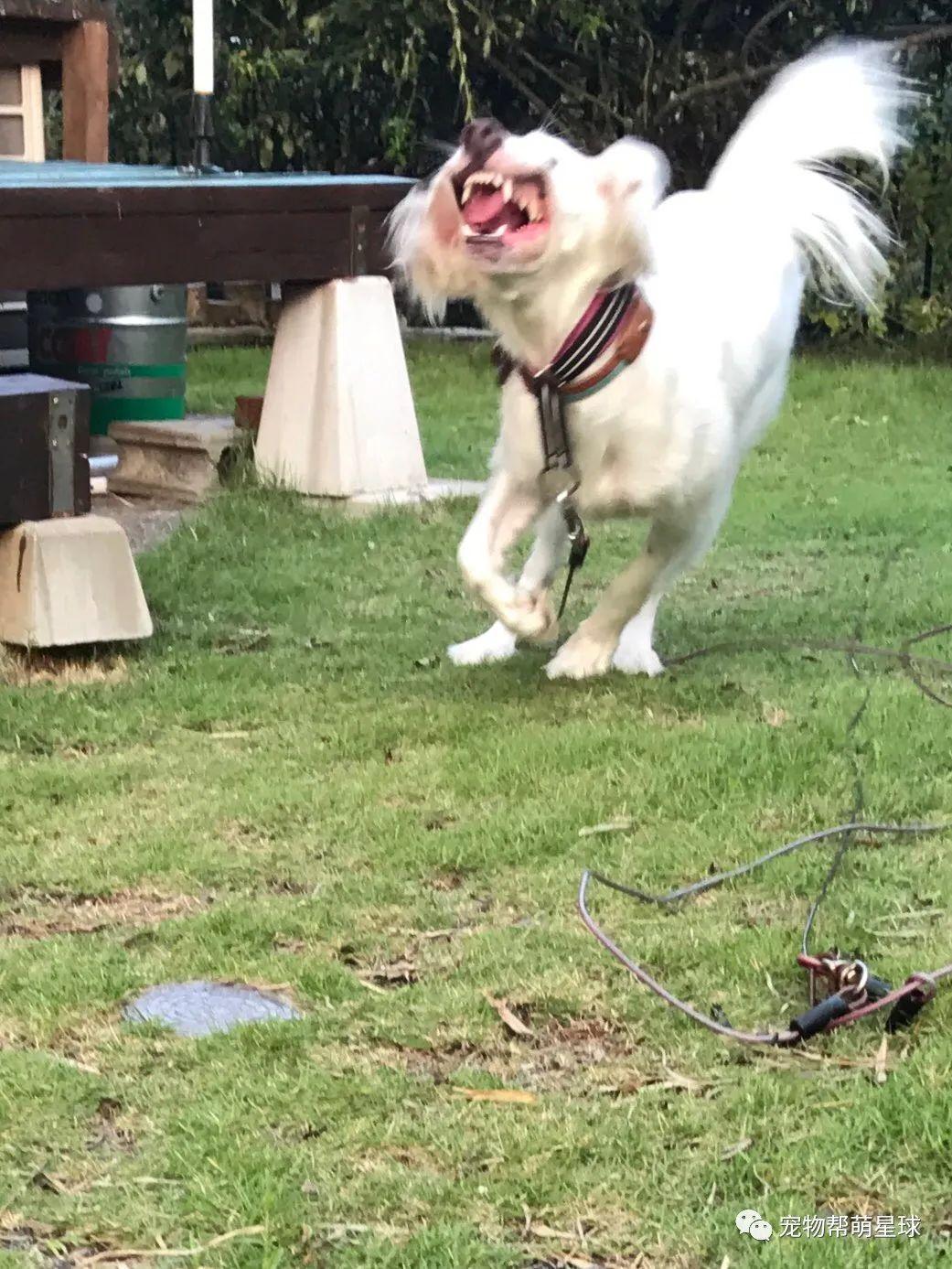 爱犬数张丑照竟一夜流出,面对突然爆火,主人急澄清:它是美少女啦!