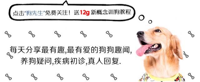 """偷狗新招数!她用母泰迪""""色诱""""了8只公泰迪!"""
