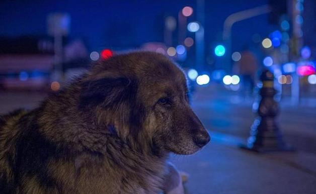 流浪狗撞伤老人,好心投喂者却被告上法庭,网友:天理何在